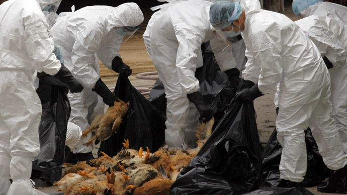 The current strain of H5N1 (bird flu) is highly pathogenic and kills most species of birds and up to 60 percent of the people it infects.