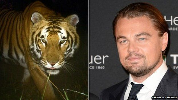 DiCaprio is a board member of World Wildlife Foundation