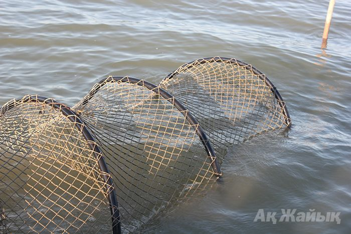 жак для ловли рыбы