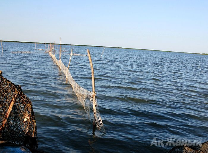 ​Whose trap nets fishery inspection is guarding?