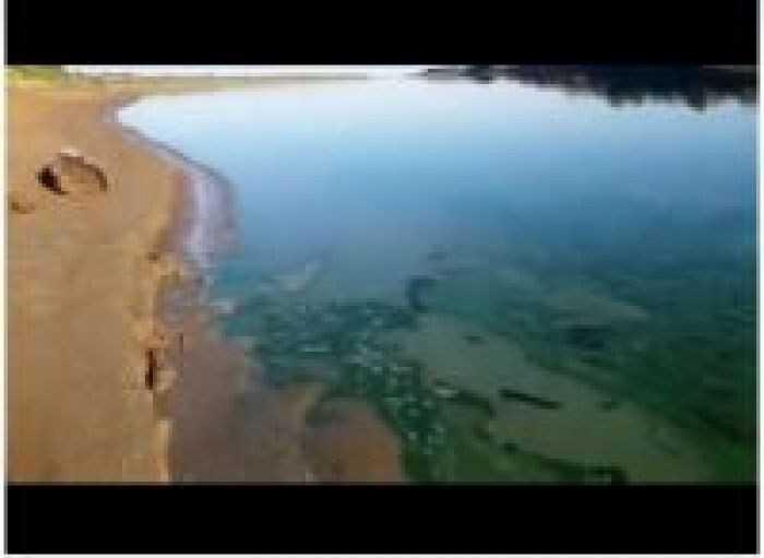 It's not a paint - Nature protection prosecutor about green colour of the River Ural
