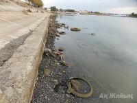 Atyrau resident pays attention of the authorities to a sad state of the Ural River (+Video)