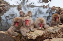Japan: See macaques take a bath in Japan's natural monkey spa