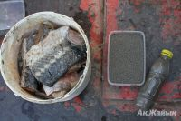 2 tons of sturgeon and 25 kg of black caviar destroyed in furnace