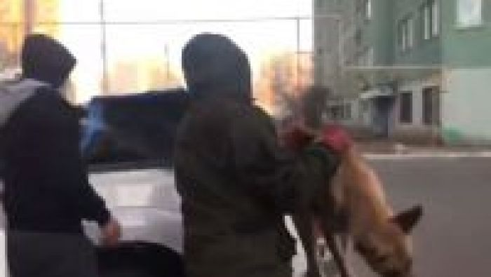 Dog shooting in Atyrau playground during the day