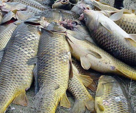 Рыбная промышленность Норвегии зарабатывает большие деньги