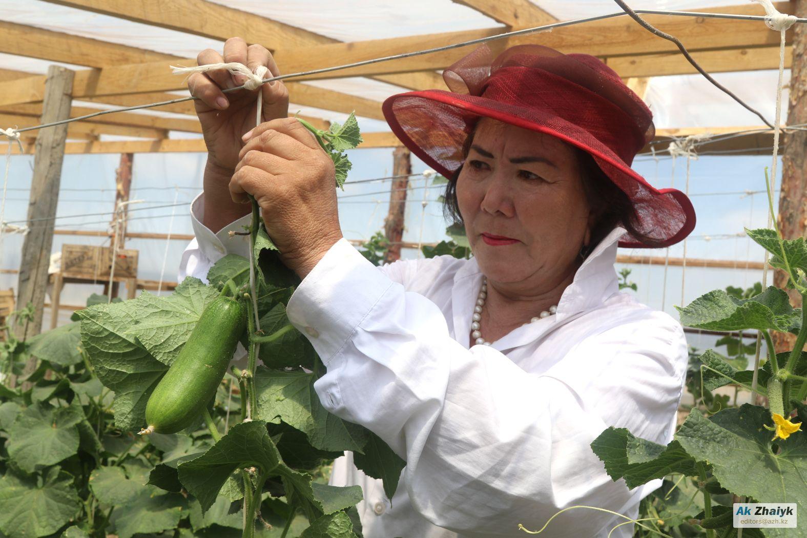 Лимонный сад мамы «Келiн»