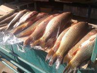 Рыба без лишних накруток-2