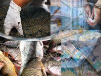 За любую рыбу - на полную катушку
