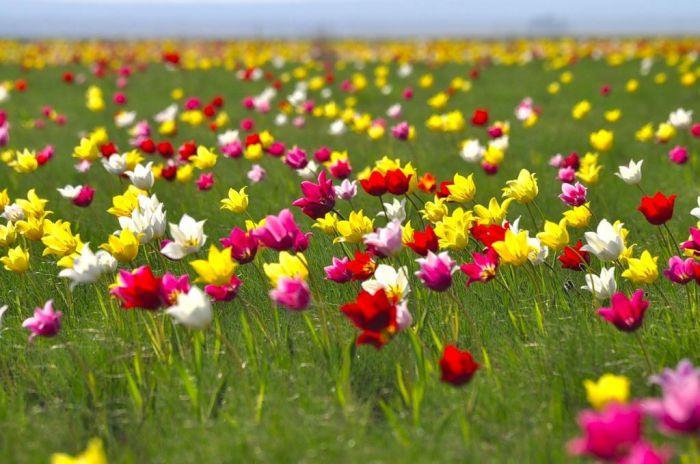Четыре дня подряд будут отдыхать казахстанцы на майские праздники