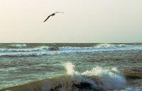 О чем просит море