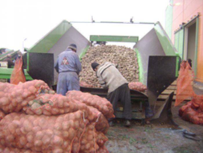 Овощехранилище  поможет сбить цены