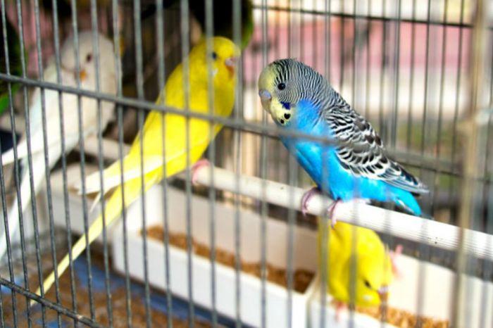 На границе задержана казахстанка с 200 попугаями