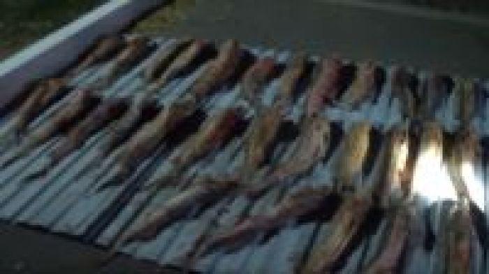 Исатайлық браконьер Атырауда ұсталды