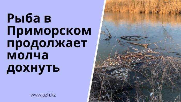Рыба в Приморском продолжает молча дохнуть