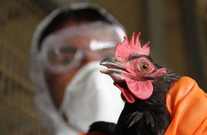 Птичий грипп выявлен уже в пяти областях Казахстана