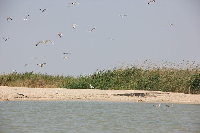 В резервате «Акжайык» гибнут птицы