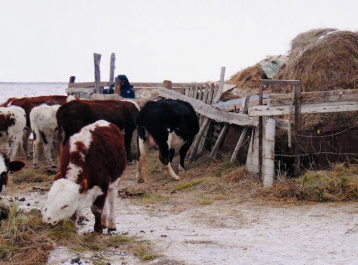 Украл корову или лошадь – с хозяином уже не договоришься