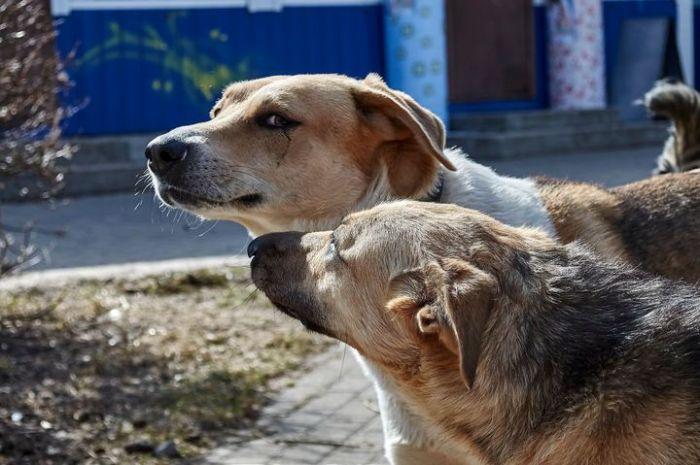 «Двоякая ситуация» с бродячими собаками