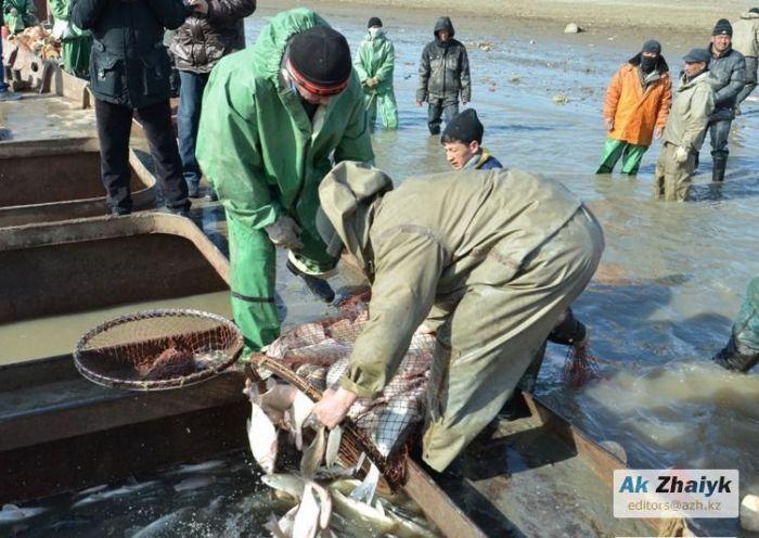 Производство товарной рыбы планируют увеличить до 15 тысяч тонн