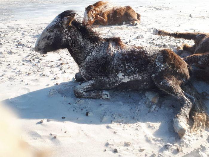 Скот мёрзнет в степи