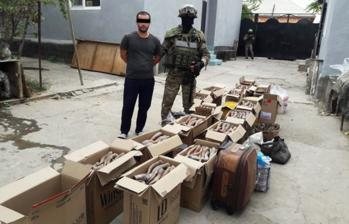 Казах – бывший гражданин Китая – тоннами отправлял в Поднебесную сайгачьи рога