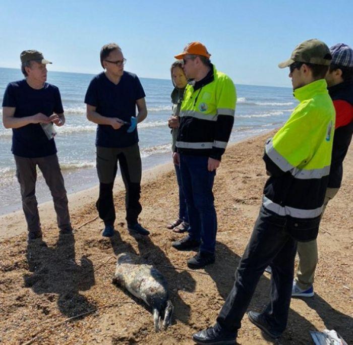 Учёные нашли на берегу Каспийского моря более 150 мёртвых тюленей