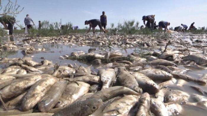 Стали известны масштабы замора рыбы
