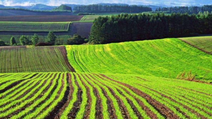 Токаев подписал закон, запрещающий продажу земель иностранцам
