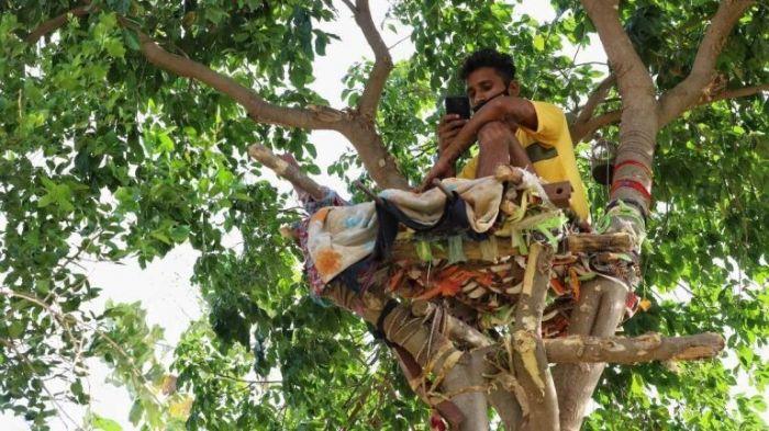 Заболевший коронавирусом индиец провёл 11 дней на дереве, чтобы не заразить родных