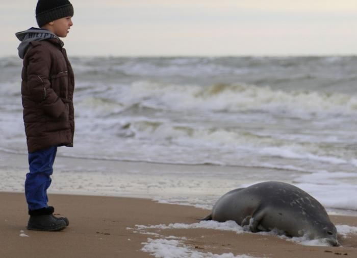 """""""Вопиющая ситуация"""". Учёные так и не нашли причину массовой гибели каспийских тюленей"""