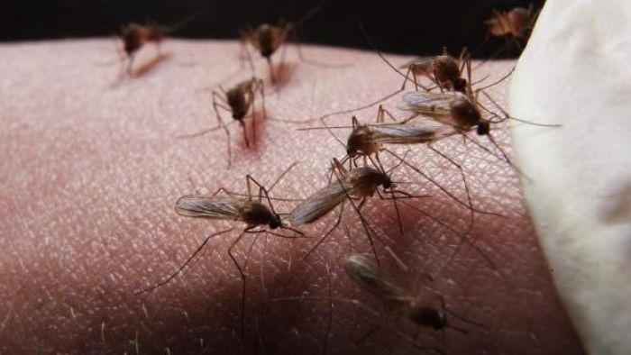 Малышева назвала эффективный способ борьбы с комарами