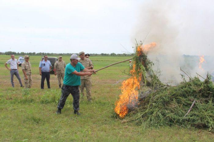 В Курмангазинском районе пограничники уничтожили 3 га дикорастущей конопли