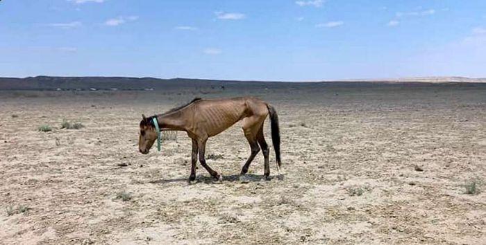 Аномальная жара приводит к серьёзным последствиям - Минсельхоз обратился к казахстанцам