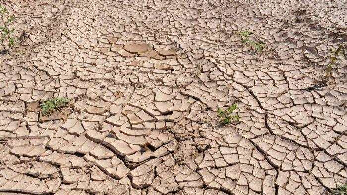 Засуха в августе побила пятилетний рекорд