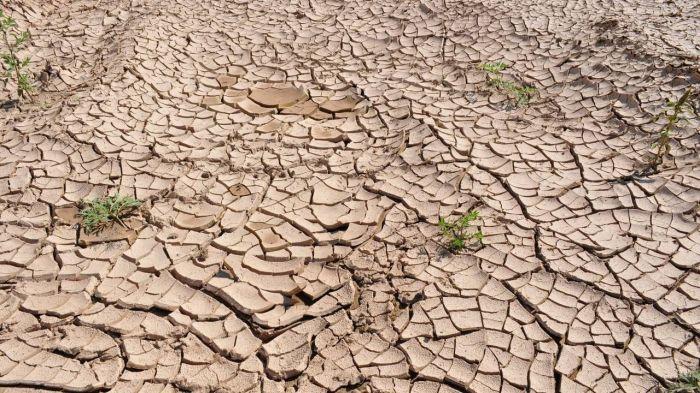 Приоритетное выращивание хлопка грозит Казахстану опустыниванием территорий – эксперт