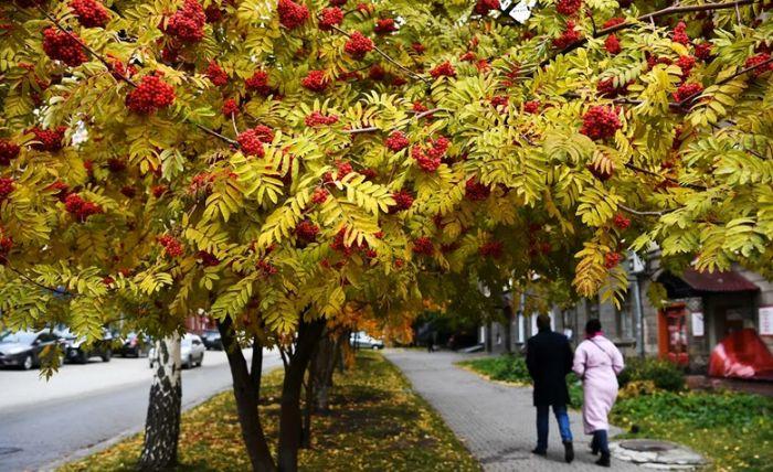 Врач рассказал, чем опасна последняя опавшая листва