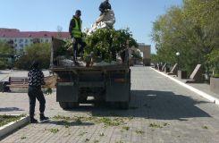 В парке Победы вырубили тополиную аллею